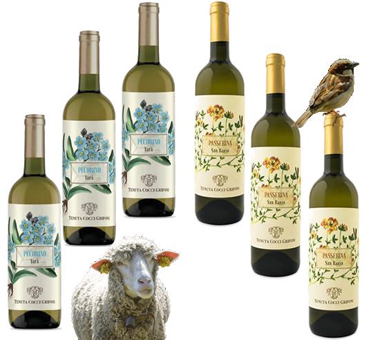 Offerta Speciale con Sconto del 35% – Vini Bianchi Pecorino e Passerina di Cocci Grifoni